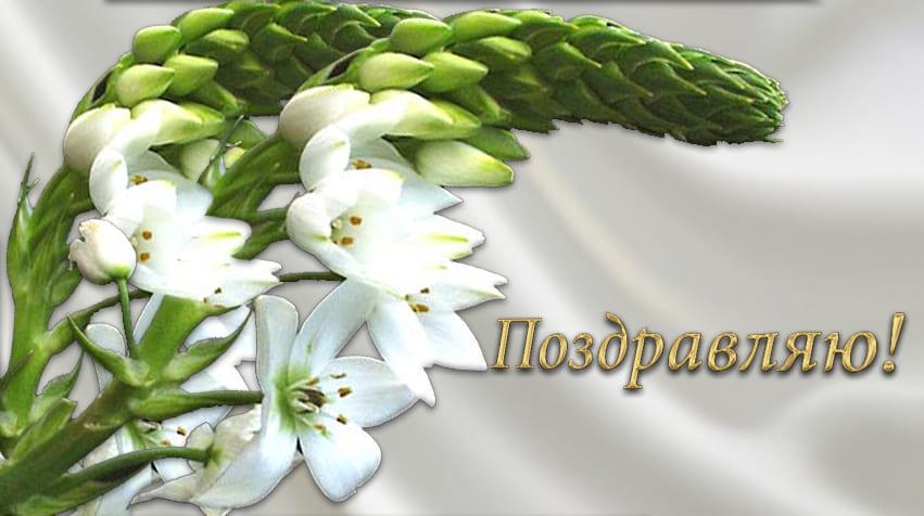 Открытка нежные цветы