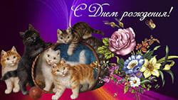 Красивая открытка с Днём рождения Милые котята