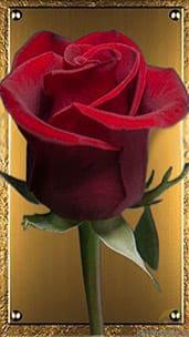 """""""Благородная роза"""" открытка любимой"""