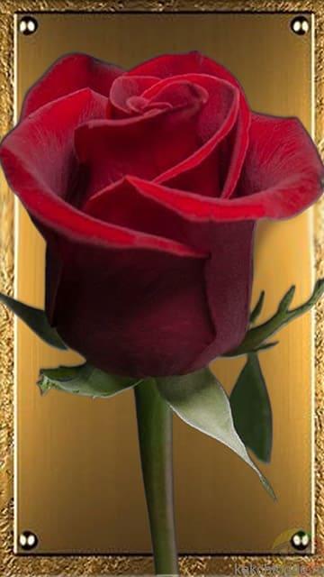 Открытка Благородная роза на золотом фоне. Скачать красивую открытку с розой на смартфон на kakchtogde.ru