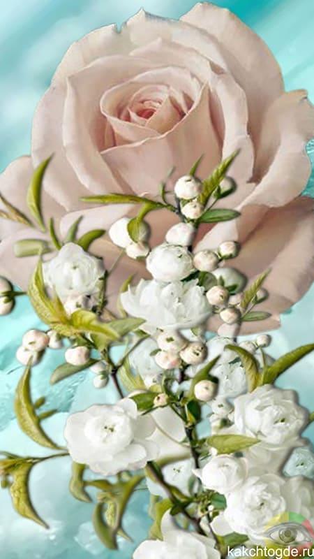 Открытка Цветы вертикальная на на телефон розовая роза и красивые белые цветы
