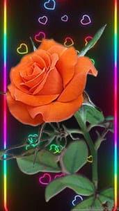 """Вертикальная открытка """"Алая роза"""""""