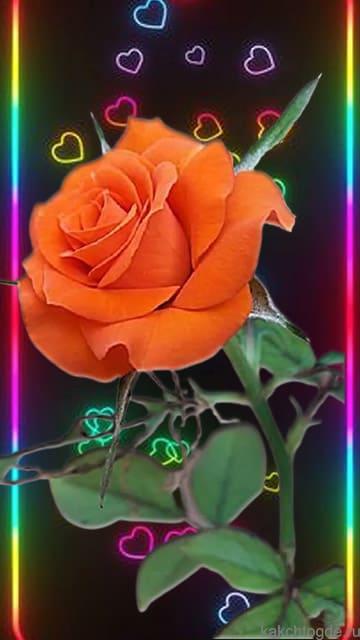 Открытка Алая роза на фоне разноцветных сердечек. Открытка на телефон любимой в любой праздник